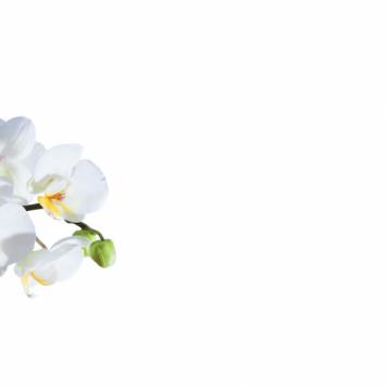 Wandbild   Alu-Dibond   Motiv: White Orchid   45 x 30 cm