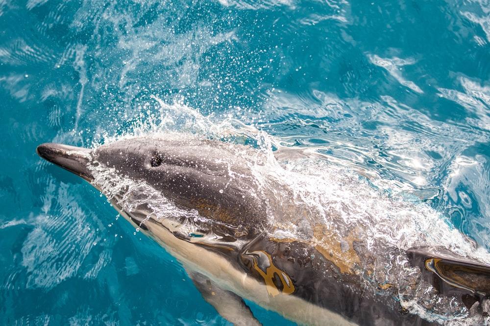 Delfin in Neuseeland