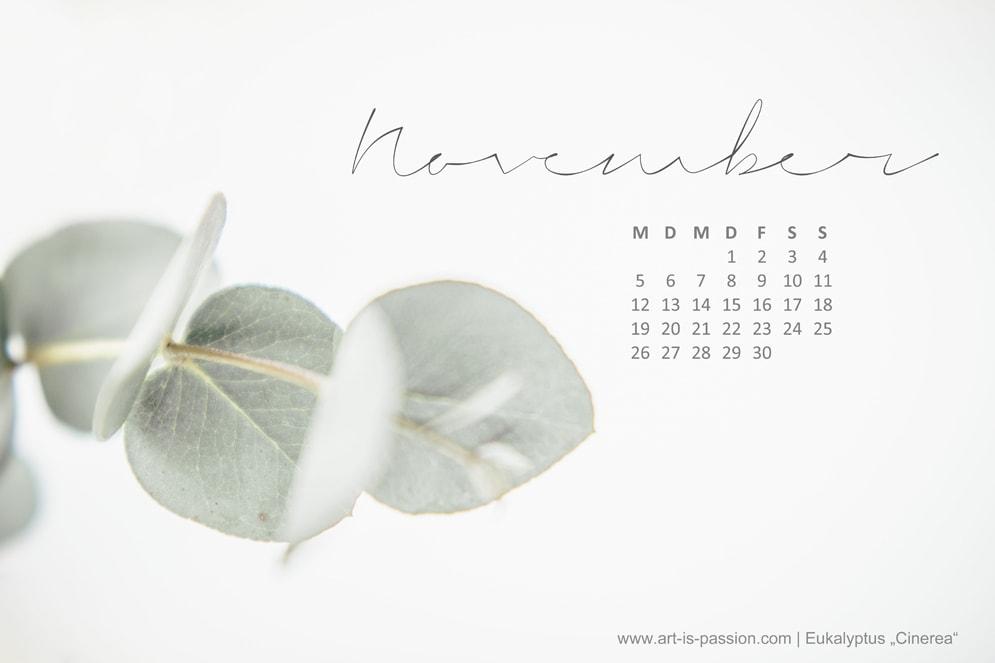 Euktalyptus Blätter