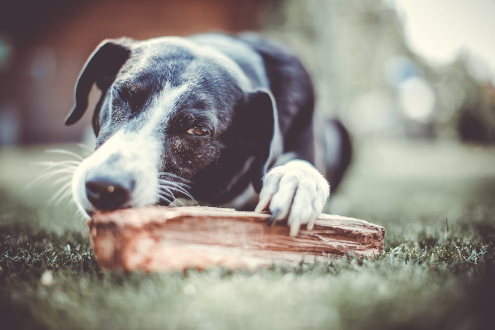 Hundefotoshooting