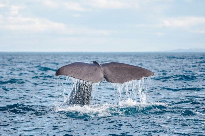 Whale Watching Neuseeland