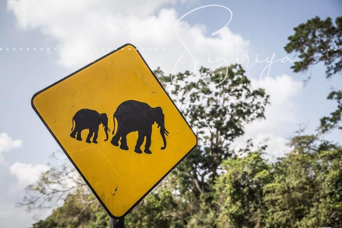 Verkehrsschild Elefanten xing in Sri Lanka