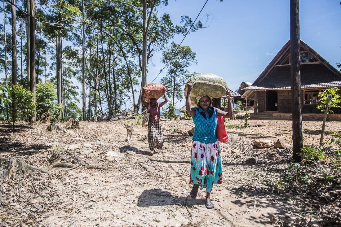 Frauen mit Teeblätter Säcken auf dem Kopf trangend in Sri Lanka