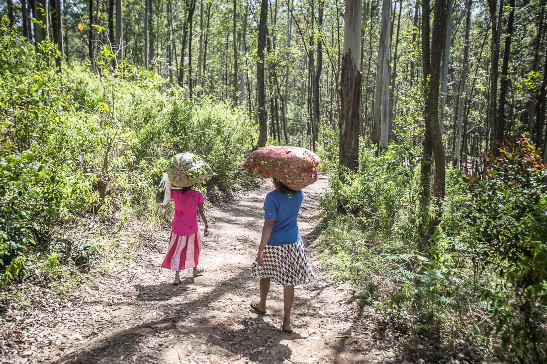 Teepflückerinnen im Wald von Sri Lanka