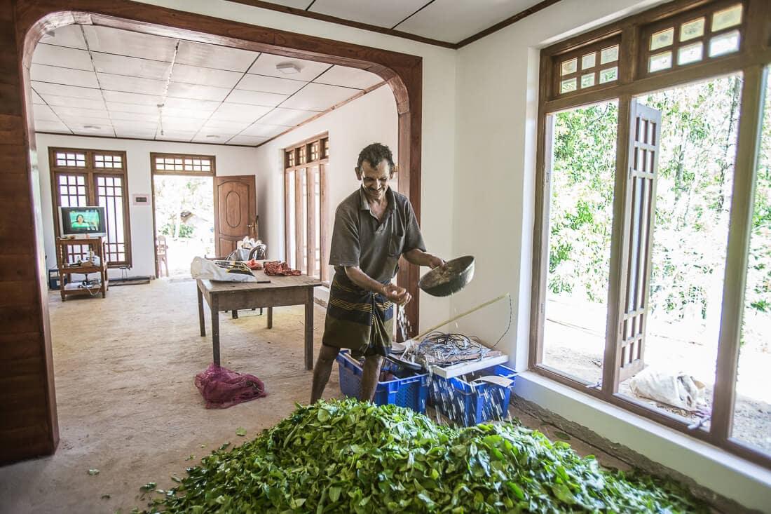 Mann bewässert Teeblätter im Haus