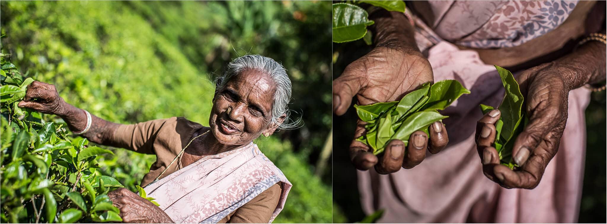 Teepflückerin-Sri-Lanka