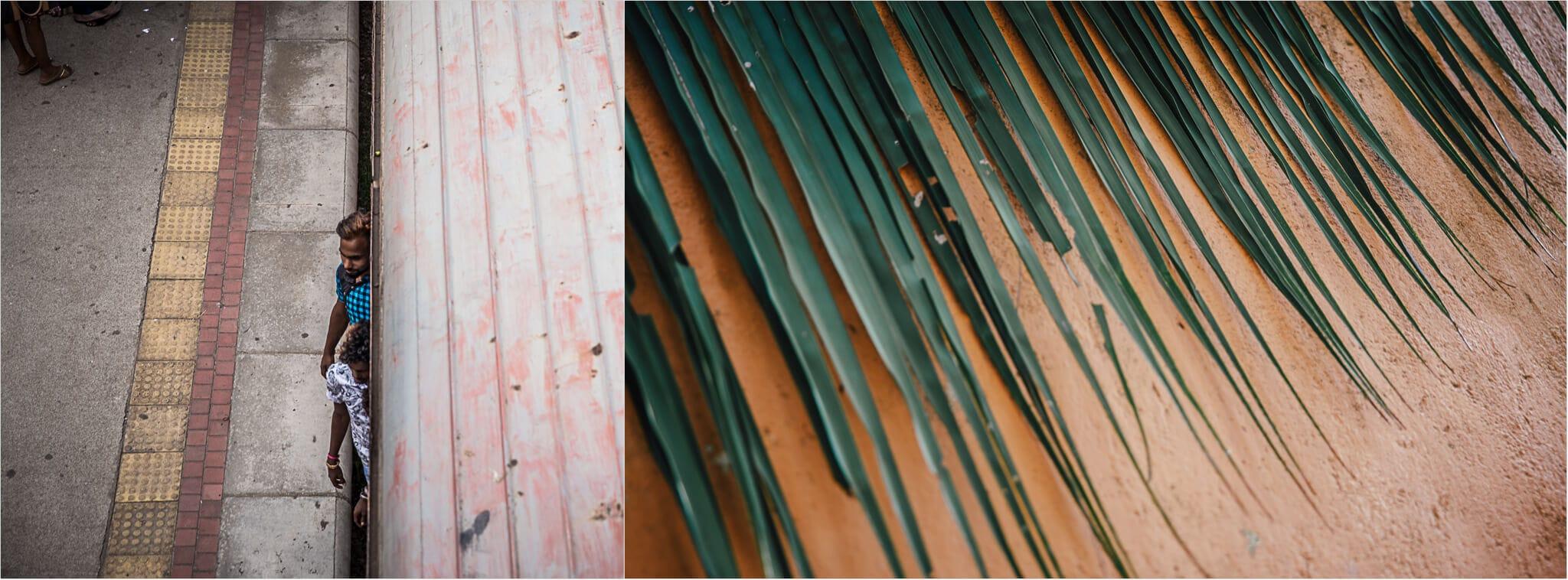 Palmenblatt und Zug in Sri Lanka