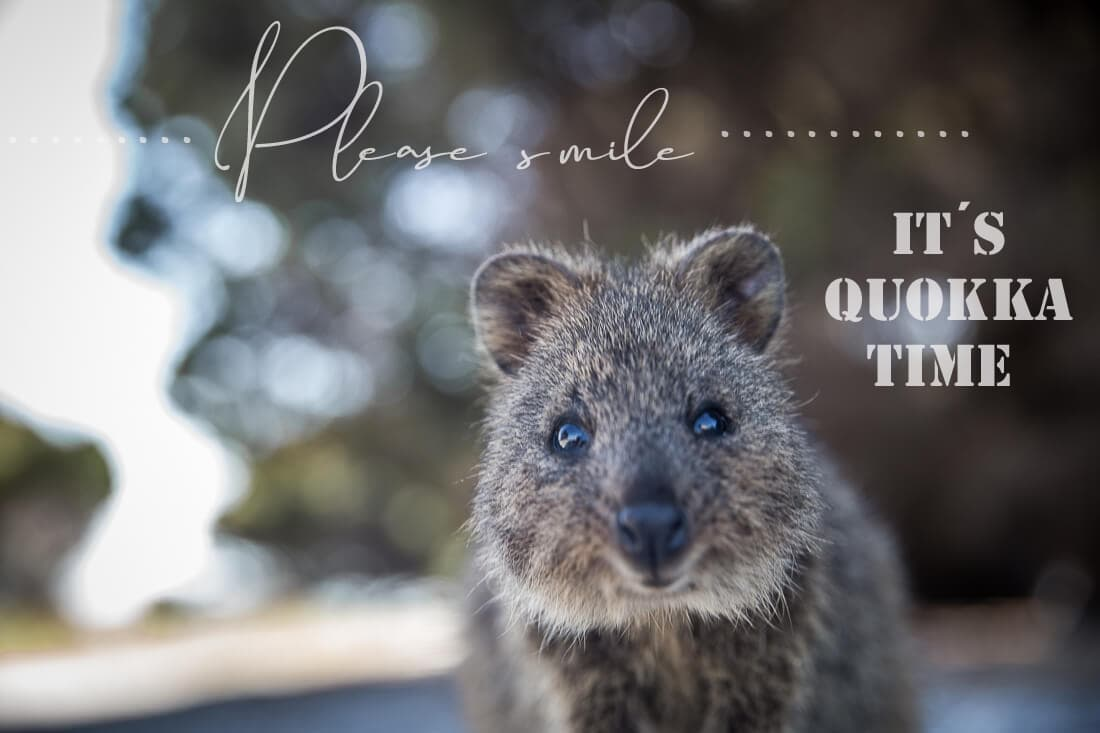 Please smile! It´s Quokka time