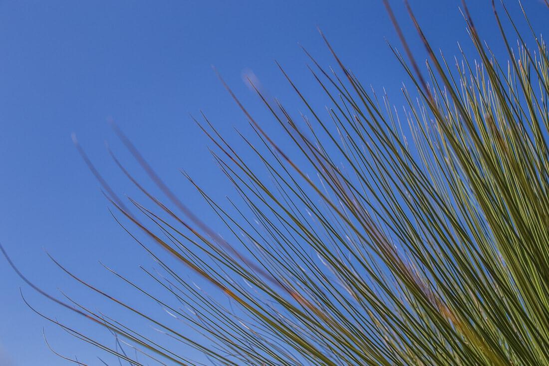 Grüne-Palme