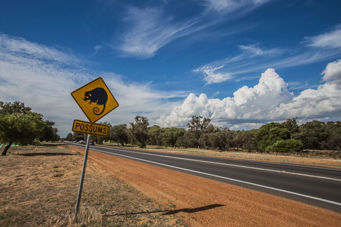 Margaret River, Roadsign Possums