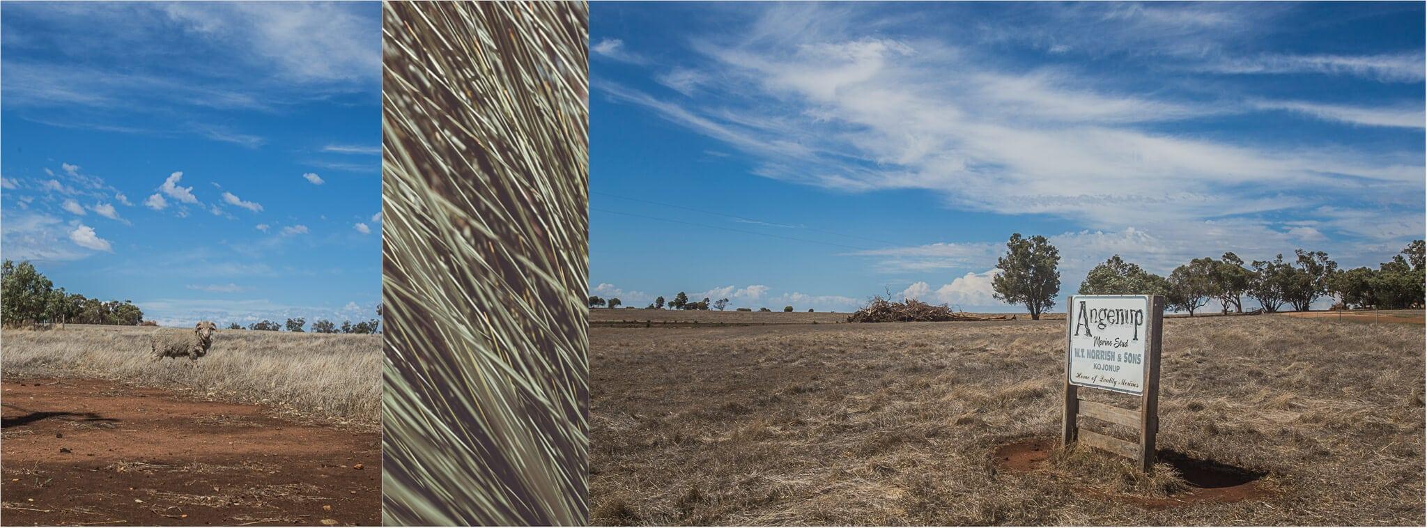 Schafsfarm im australischen Outback
