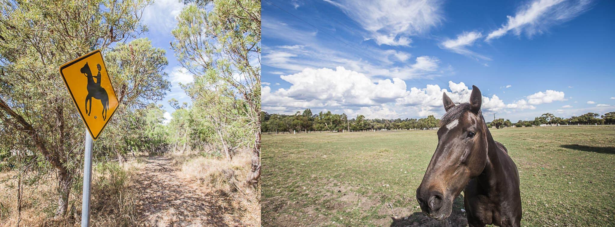 australische-Pferde-Margaret-River-Region