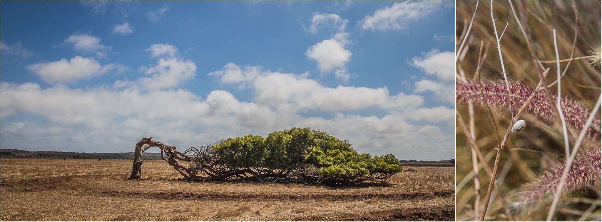Leaning Tree, Australia, Wirnda Ngadara