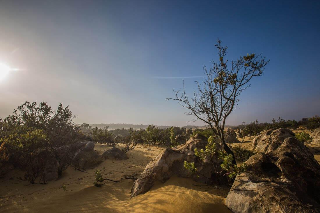 The Pinnacles im Nambung Nationalpark
