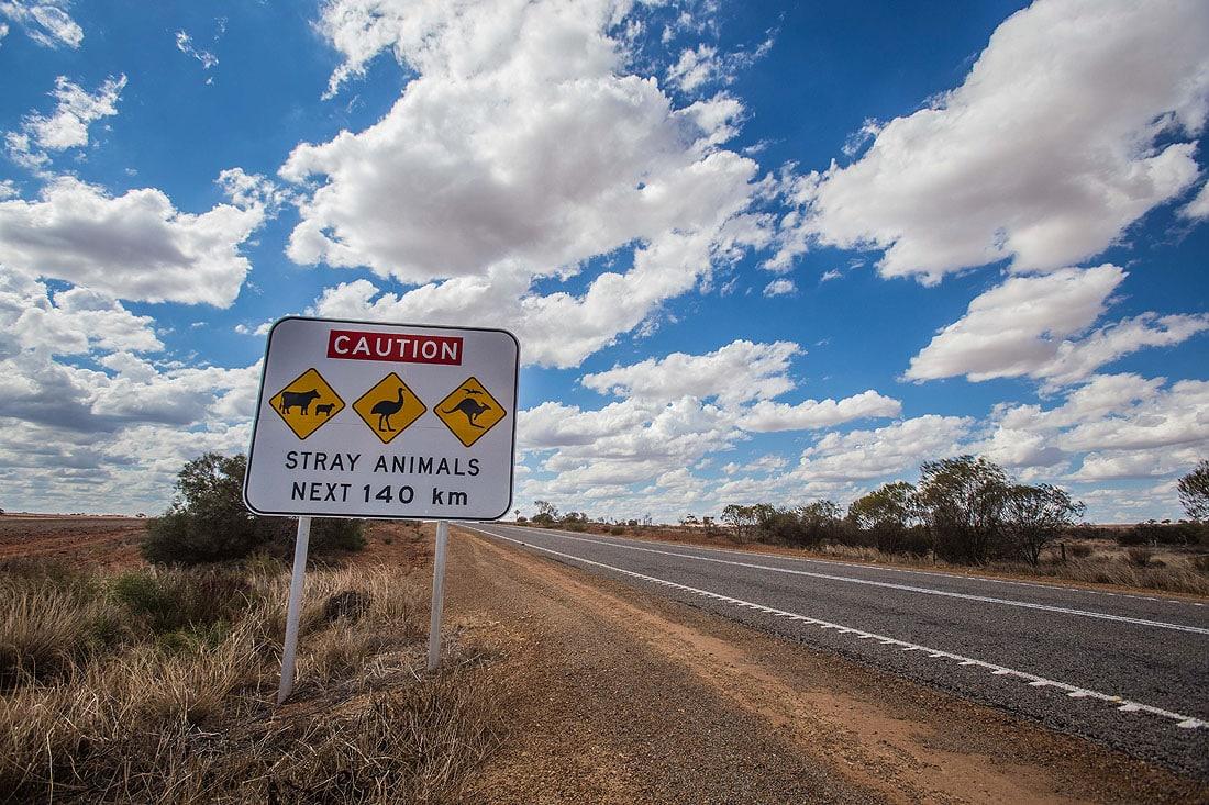 Straßenschild Australien Stray Animals nähe Kalbarri Nationalpark
